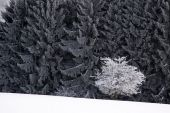 Snow covered wintry forest — Stock Photo