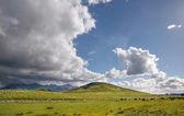 Sheep on green farmland — Stock Photo