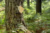 Tree with for sale tag tied around the trunk — Stock Photo