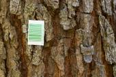 Barcode on a tree — Stock Photo