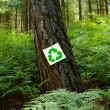 Recycle sign on a pine tree — Stock Photo #66045111