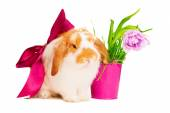 Cute rabbit with red silk bow — Stock Photo
