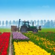 Colorful tulip fields — Stock Photo #65884551