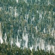 Fir trees forest covered with snow — Stock Photo #65985261