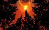 лес и солнечного света — Стоковое фото