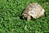 черепаха — Стоковое фото