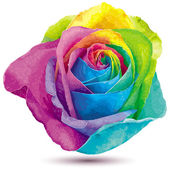 Rainbow color rose — Stock Vector
