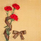 Carnations and Georgievsky tape — Stock Photo
