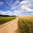The rural road — Stock Photo #56433697
