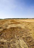 Landbouwgebied — Stockfoto