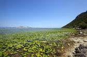 Il lago (Montenegro) — Foto Stock