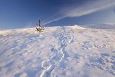 Campo coberto de neve — Fotografia Stock