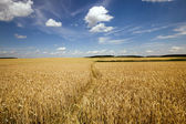 Footpath in the field — Stock Photo