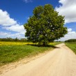 Rural road — Stock Photo #56810191