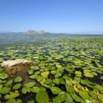 The lake (Montenegro) — Stock Photo #56810753