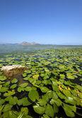 The lake (Montenegro) — Stock Photo