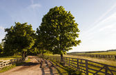 Wooden fence on the nature — Stock Photo