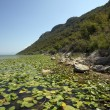 Lake Skadar located in Montenegro — Stock Photo #64506815