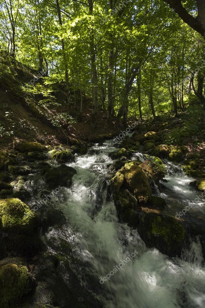 在森林里的小山河流– 图库图片