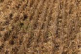 Agricoltura — Foto Stock