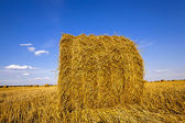 Agricultural field   — Stockfoto