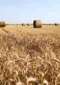 Pole rolne — Zdjęcie stockowe