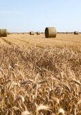 Terrain agricole — Photo