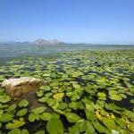 The lake. Montenegro — Stock Photo #75715441