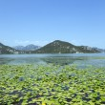 The lake .Montenegro — Stock Photo #75715847