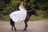 Bride on horse — Foto Stock