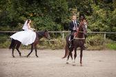Wedding couple on horses — Stock Photo