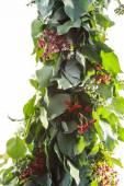 Blackberry New Year tree — Stock fotografie