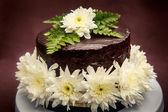 Chocolate delicious cake closeup  — Stock fotografie
