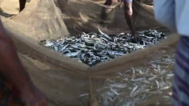 Fishing net full of fish — Stock Video