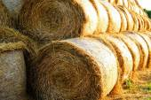 Packed bales of straw close-up — Stock Photo