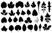 Set of different leaves — Stock Vector