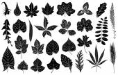Illustration of different leaves — Stock Vector