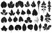 Insieme di foglie diverse — Vettoriale Stock