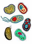 Amebas, amoebas, microbes and germs set — Stock Vector