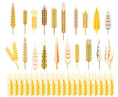 Ears of wheat and cereals symbols — Stockvektor