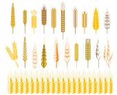 Ears of wheat and cereals symbols — 图库矢量图片