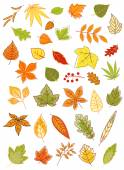 Colorful autumn leaves set — Stock Vector