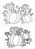 Black and white line drawings of pumpkins — Stock Vector