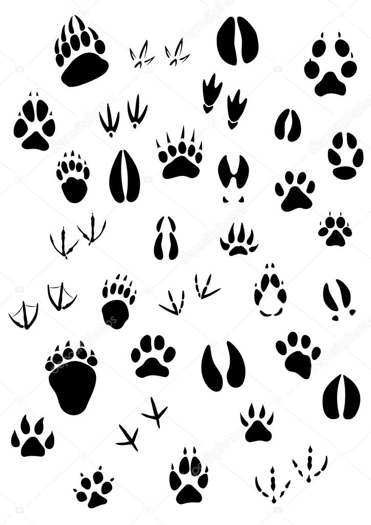Farm Animal Footprints