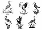 Stork, heron, crane and egret birds — Stock Vector