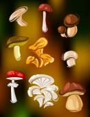 Colorful set of vector mushrooms and fungi — Stock Vector