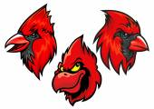 Cardinal bird heads set — ストックベクタ