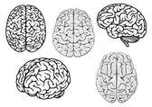 Black and white cartoon human brains — Stock Vector