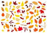 Autumn leaves, herbs, berries and acorns — Stock Vector