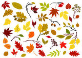 Autumnal leaves, berries and herbs — Stock Vector